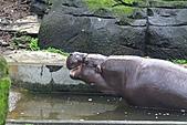 2010-10-24 台北市立動物園:IMG_1482.jpg