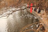 2013-01-17 雲南昆明-翠湖、陸軍講武堂:IMG_9077.jpg