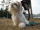 2009-01-20 將軍山公園棒球:IMG_9739.JPG