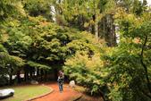 2011-10-08 梨山-福壽山:IMG_3575.jpg