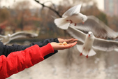 2013-01-17 雲南昆明-翠湖、陸軍講武堂:IMG_9044.jpg