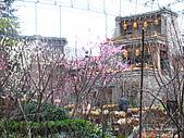 2008-03-05 九寨天堂早晨雪:IMG_6744.JPG