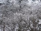 2008-03-07 峨嵋山(金頂):IMG_7174.JPG