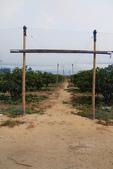 2011-08-25 福建東山-台灣黑珍珠:IMG_1372.jpg