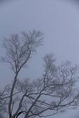 2010-12-04 太平山-山毛櫸步道:IMG_4273.jpg