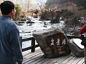 2008-03-04 九寨溝-盆景灘:IMG_6718.JPG