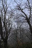 2010-12-04 太平山-山毛櫸步道:IMG_4277.jpg