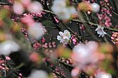 2011-03-05 台北-陽明山賞花記:IMG_9739.jpg