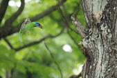 2013-06-30 台北市-大安中正紀念植物園:IMG_1497.jpg