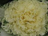 2009-01-25 靖江王陵:IMG_0081.JPG