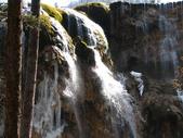 2008-03-04 九寨溝-珍珠灘瀑布:IMG_6601.JPG