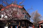 2013-01-20 雲南麗江-束河古鎮、大研古鎮夜景:IMG_0073.jpg
