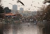 2013-01-17 雲南昆明-翠湖、陸軍講武堂:IMG_9060.jpg