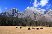 2013-01-21 雲南麗江-玉龍雪山、雲杉坪、藍月谷:IMG_0319.jpg