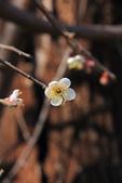 2013-01-20 雲南麗江-束河古鎮、大研古鎮夜景:IMG_0175.jpg