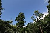 2010-10-23 紗帽山:IMG_0981.jpg