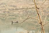 2011-01-25 湖南-苦竹寨:IMG_7816.jpg