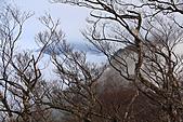 2010-12-04 太平山-山毛櫸步道:IMG_4297.jpg