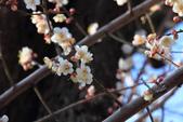 2013-01-20 雲南麗江-束河古鎮、大研古鎮夜景:IMG_0177.jpg