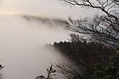 2010-12-04 太平山-山毛櫸步道:IMG_4301.jpg