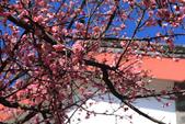 2013-01-20 雲南麗江-束河古鎮、大研古鎮夜景:IMG_0074.jpg