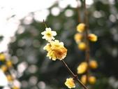 2008-03-06 茂縣->樂山大佛:IMG_6950.JPG