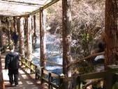 2008-03-04 九寨溝-珍珠灘瀑布:IMG_6617.JPG