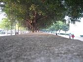 2009-01-19 雲霄江濱路閒晃:IMG_9697.JPG