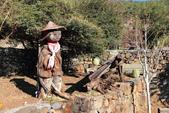 2013-01-20 雲南麗江-玉水寨:IMG_9728.jpg