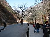 2008-03-04 九寨溝-盆景灘:IMG_6724.JPG