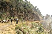 2010-12-04 太平山-山毛櫸步道:IMG_4182.jpg