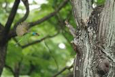 2013-06-30 台北市-大安中正紀念植物園:IMG_1544.jpg