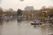 2013-01-17 雲南昆明-翠湖、陸軍講武堂:IMG_9015.jpg