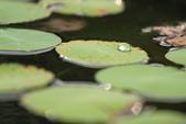 2013-06-30 台北市-大安中正紀念植物園:IMG_1688.jpg