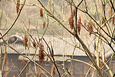 2011-01-25 湖南-張家界土家風情園:IMG_7953.jpg
