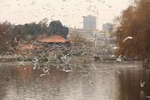 2013-01-17 雲南昆明-翠湖、陸軍講武堂:IMG_9072.jpg