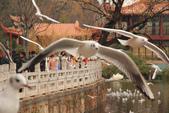 2013-01-17 雲南昆明-翠湖、陸軍講武堂:IMG_9102.jpg