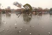 2013-01-17 雲南昆明-翠湖、陸軍講武堂:IMG_9017.jpg