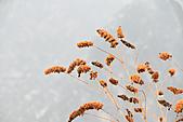 2011-01-24 湖南-張家界天門山:IMG_7556.jpg