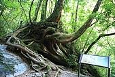 北橫_西湖度假村之旅:NorthRoad_017.JPG