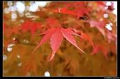 971120日本北陸-黑部立山之旅:IMG_4776.jpg