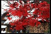 971120日本北陸-黑部立山之旅:IMG_4788.jpg