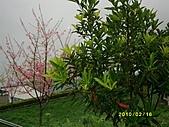 玉里農地:IMG_0496.JPG