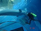 KT全家遊:無奈的潛水員