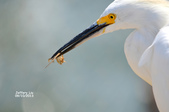 Wildlife:DSC_1134.JPG