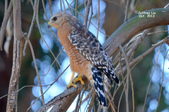 Wildlife:DSC_1063.JPG