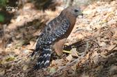 Wildlife:DSC_1046.JPG