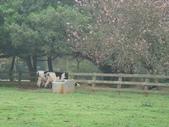 1000503哺心農場:DSC07943.JPG