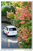 20131013 北市 芝山岩河濱公園 隨拍:DSC_8000.JPG