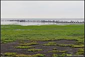 20150509_高美濕地:20150509_55.jpg